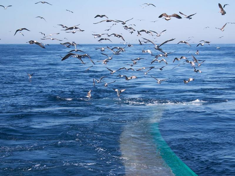 Potential impacts of the proposed Addo MPA on commercial fisheries