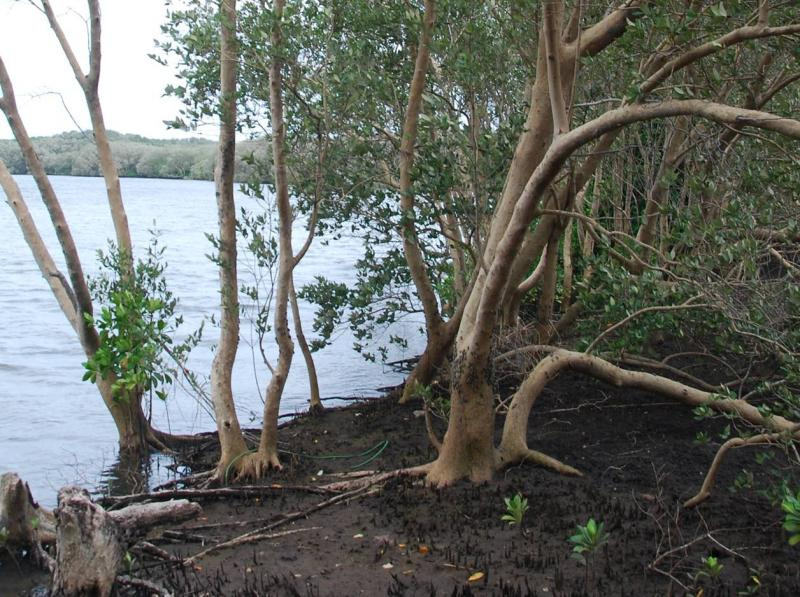 Identification and profiling of priority mangrove sites in Liberia and identification and delineation of two coastal and marine protected areas.