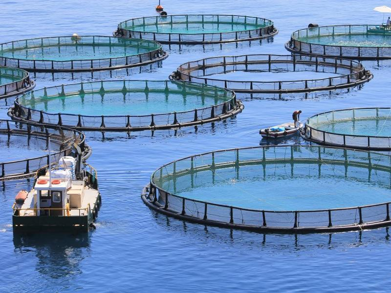 Baseline assessments & EIAs for Marine Aquaculture Development Zones