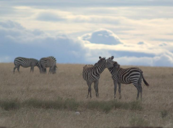 Climate Change Vulnerability and Adaptation Assessment for the Greater Mara Ecosystem
