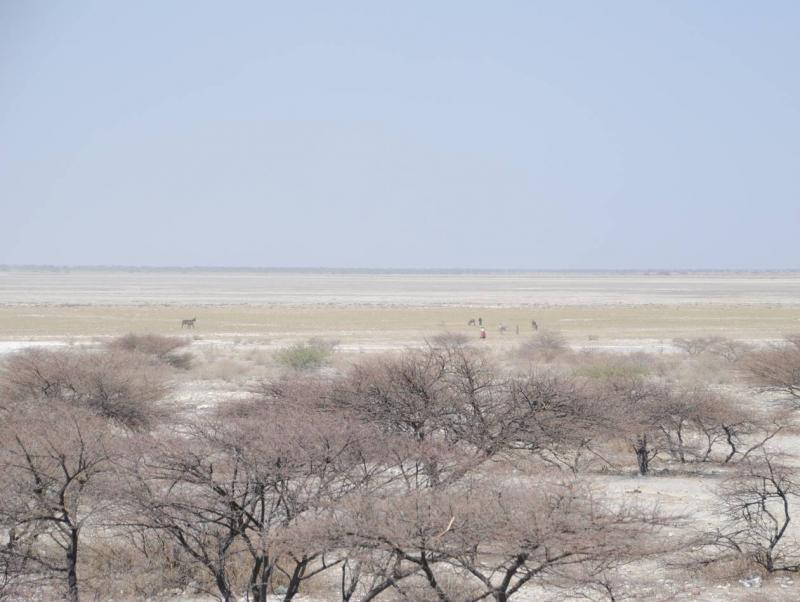 Value of protected areas of Botswana's Makgadikgadi Pans and optimal models for co-management and a financing strategy.