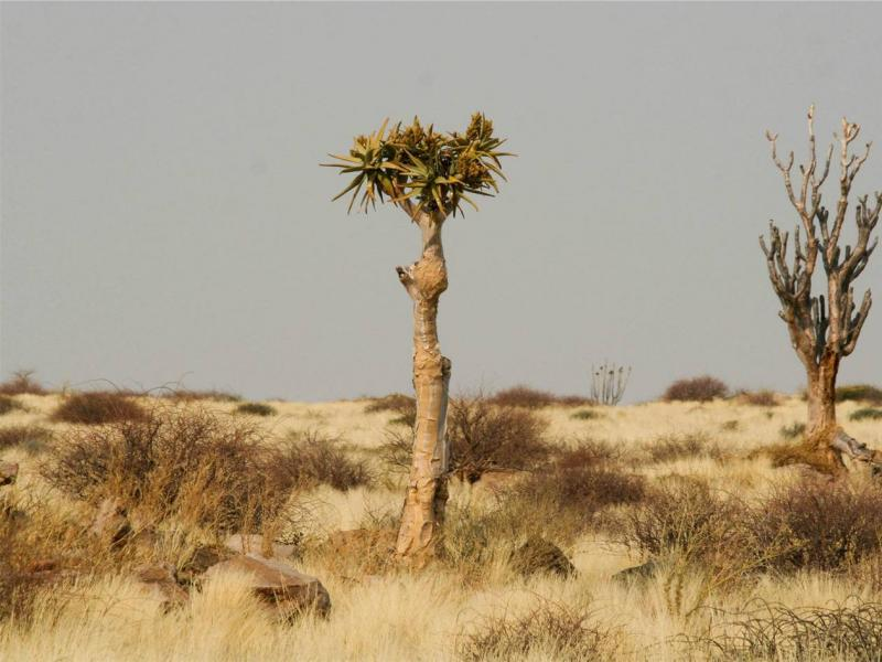 Valuation and financial plan for Namibia's protected area system