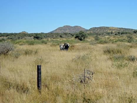 Incentives for sustainable practices and conservation in Namibia's freehold rangelands